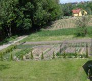 Ogródek warzywny, rośliny