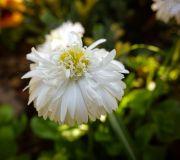 kwiatki z ogródka