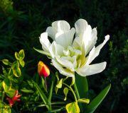 piekne rosliny ogródek przydomowy