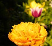 Wiosna ogrodzie