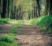 Wiosna w alejce pomiędzy drzewami