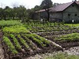 ogródek babci
