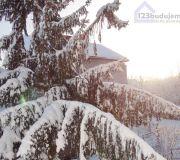 zaśnieżony świerk u sąsiadów