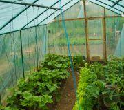 Szklarnia, rośliwy warzywa pomidory ogróki