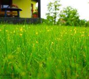 Kaczyńce w trawie