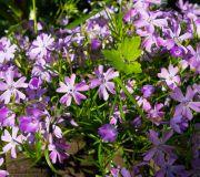 kwiaty ogród przy domu