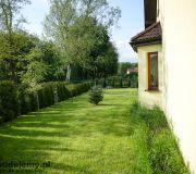 Widok z boku na ogrodzenie z thui i trawnik