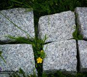 kostka granitowa 8 11 przez pół