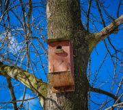 Budka dla ptaków wykonana i powieszona
