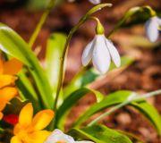 kwiatki wczesno wiosenne do ogrodu