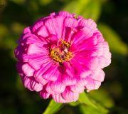 kwiat już przekwita nastała jesień w ogrodzie