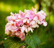 kwiat z ogrodu babci lusi