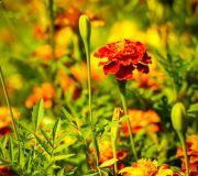 kwiaty w ogrodzie babi Lucynki