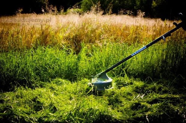 podkaszarka greenworks radzi sobie nawet z wysoką roslinnością