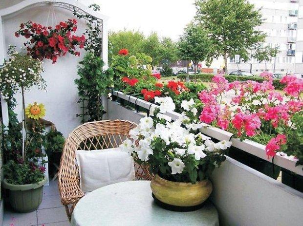 rosliny na balkon
