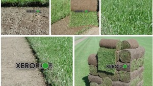 trawnik w rolkach
