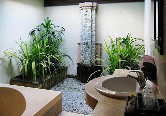 jakie rośliny nadają się do łazienki