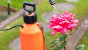 opryskiwacz-ogrodowy