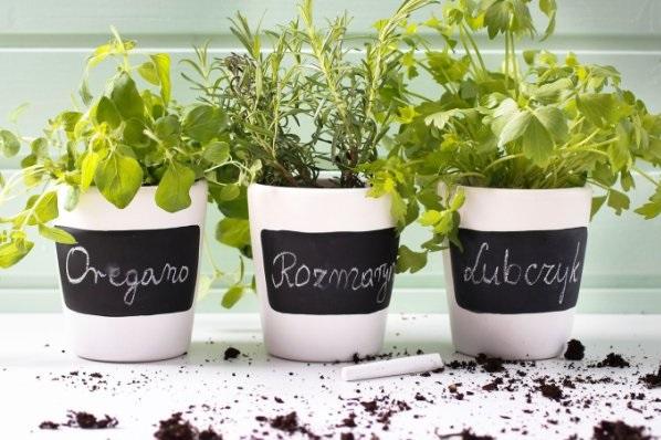 jak uprawiać zioła