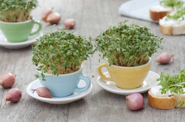 własne zioła w kuchni