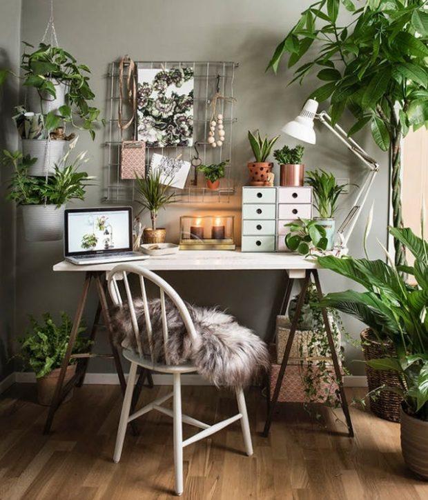 najlepsze rośliny do pokoju