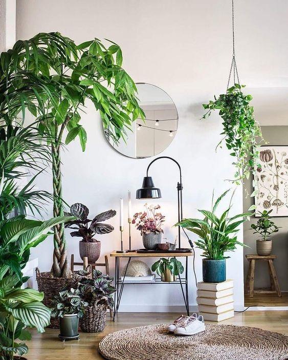 rośliny we wnętrzach
