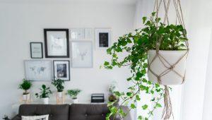 rośliny-we-wnętrzach