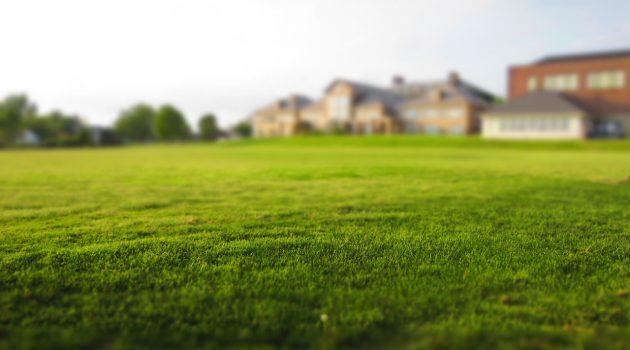 piękny-trawnik