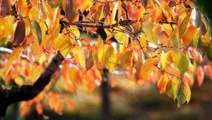 ogród-jesień