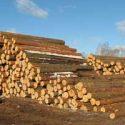 Ukraina. Drewno kominkowe od 15 zl/m3, sadzonki, choinki 10 zl.
